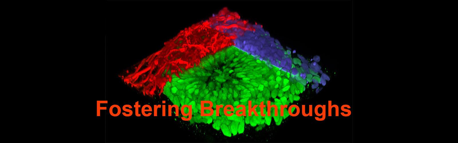 Neural tissue image Fostering Breakthroughs